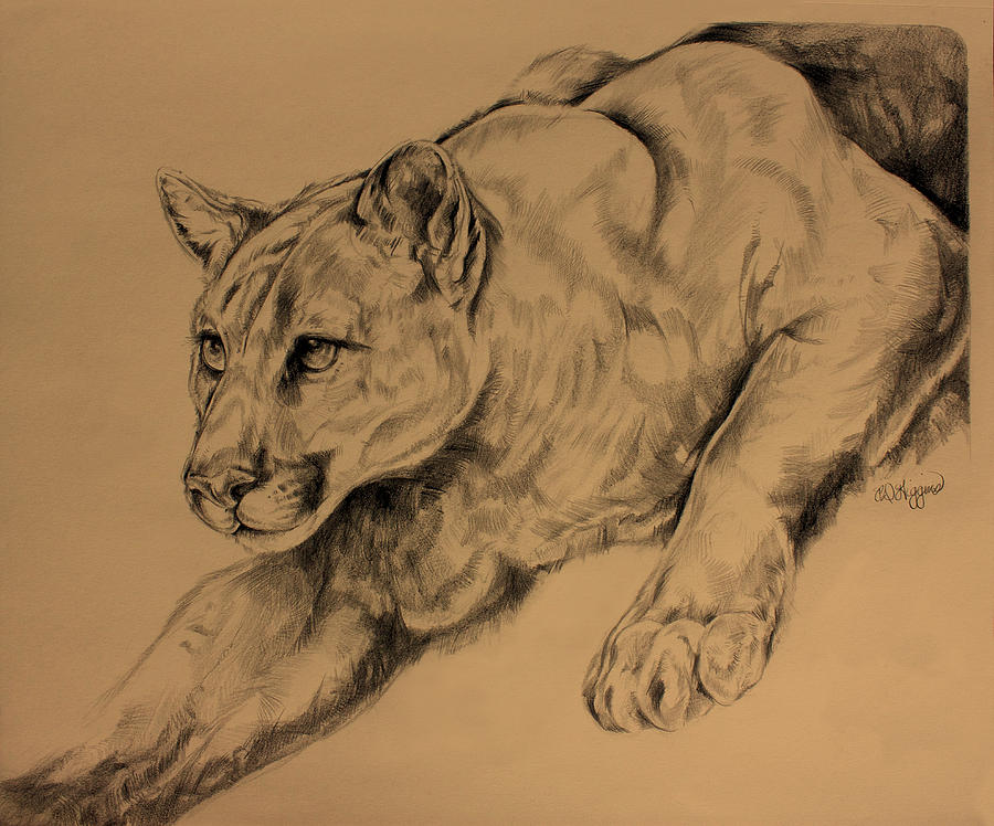 Mountain Lion Drawing - Cougar by Derrick Higgins