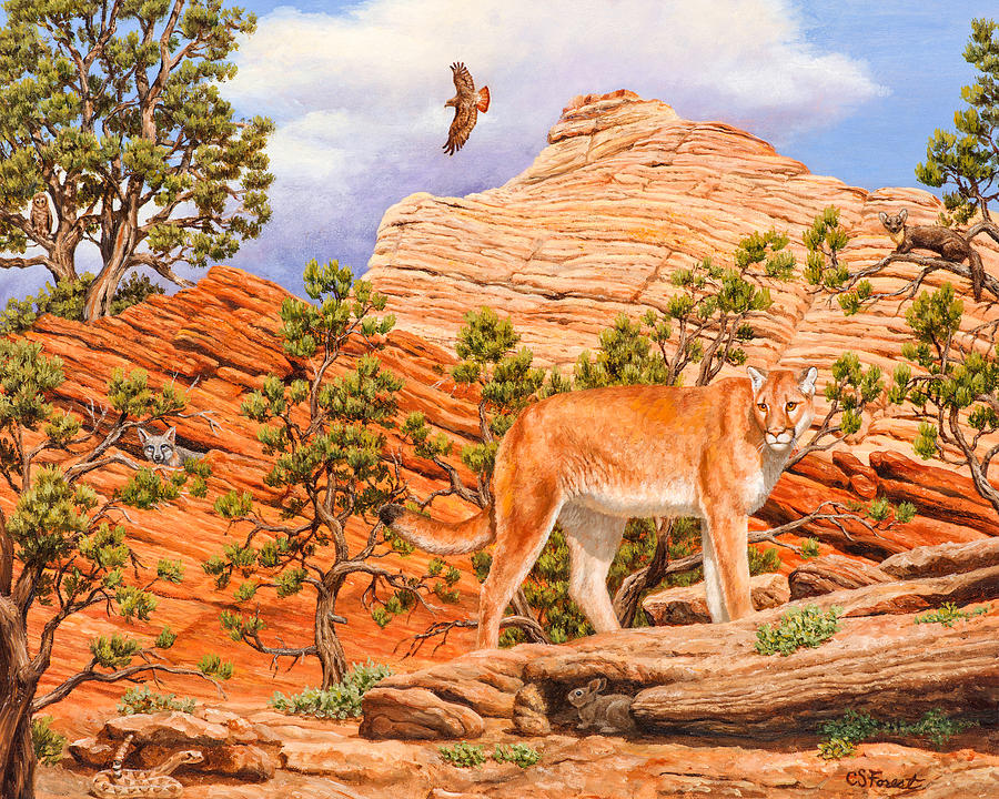 Cougar Painting - Cougar - Dont Move by Crista Forest