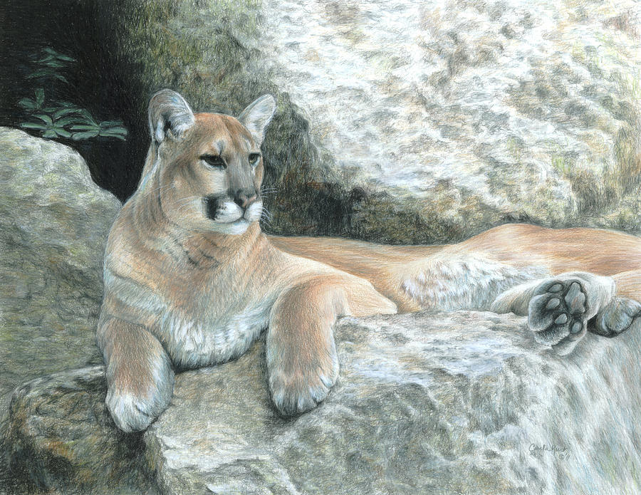 Mountain Lion Painting - Cougar Haven by Carla Kurt