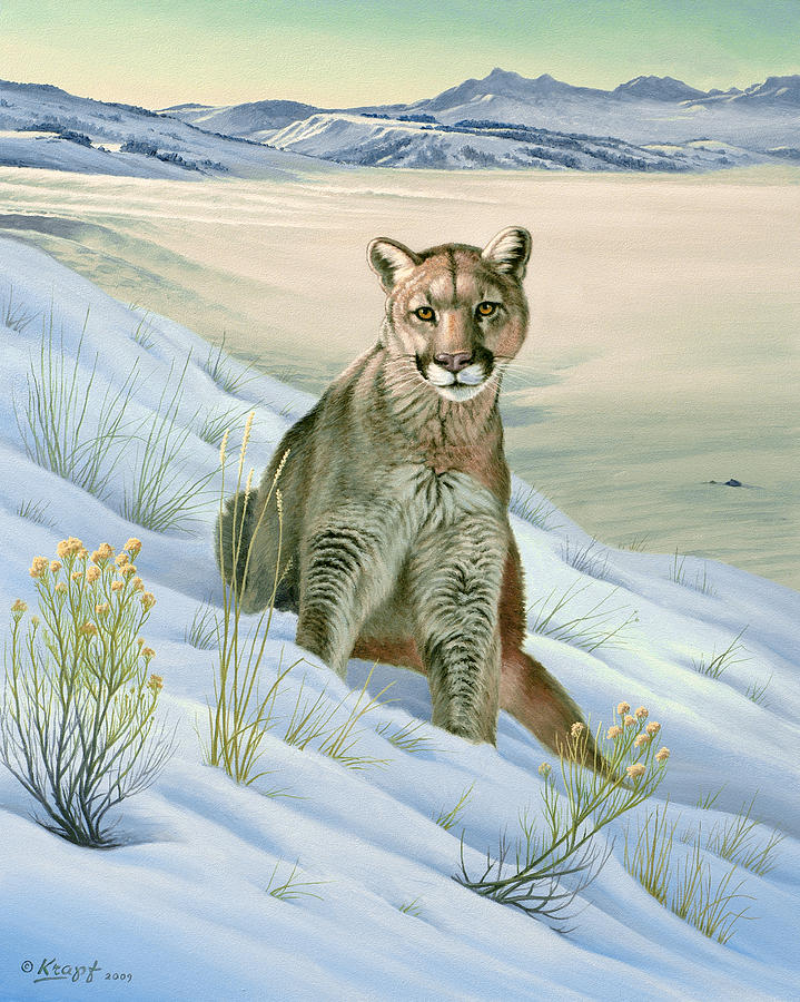 Wildlife Painting - Cougar in Snow by Paul Krapf