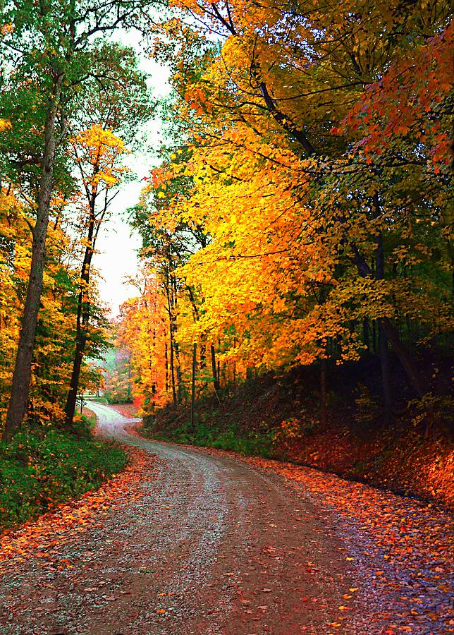 Country Photograph - Country Autumn Gravel Road by Julie Dant