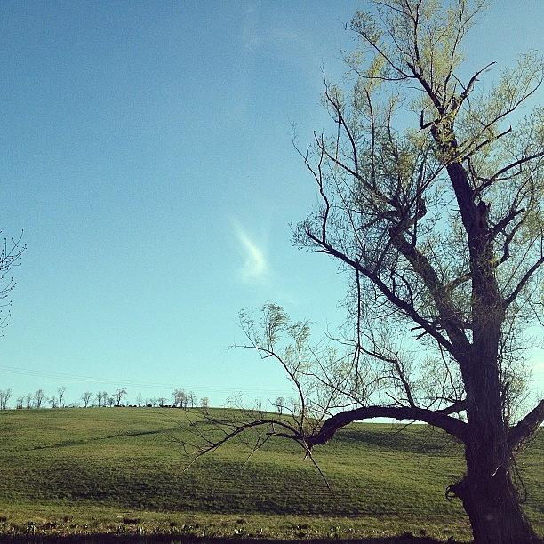 Blue Photograph - #country #countryside #tree #bluesky by Amber Campanaro