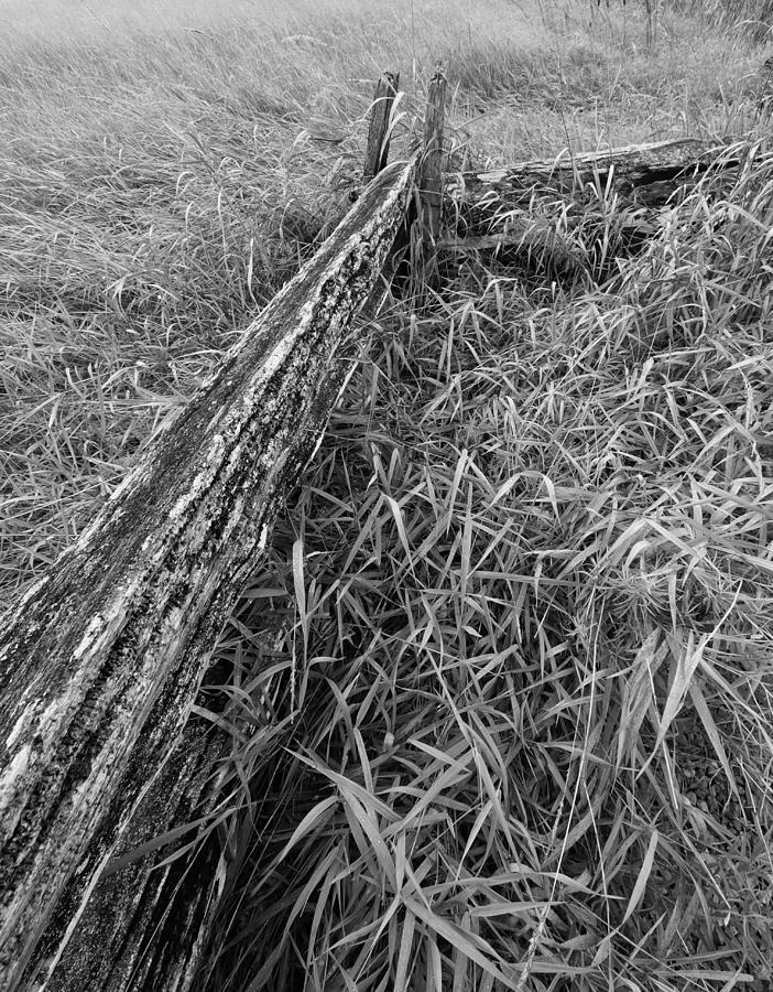 Country Fence by Stan Wojtaszek