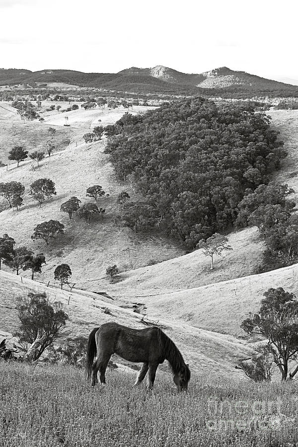 Country Hills Photograph - Country Hills by David Benson