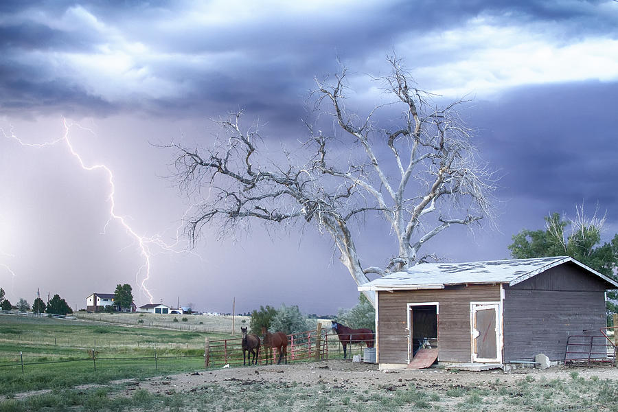 Country Horses Lightning Storm Co Photograph