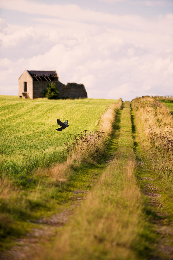 Country Photograph - Country Lane by Amanda Elwell