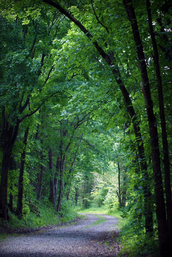 Tree Photograph - Country Lane by Cricket Hackmann