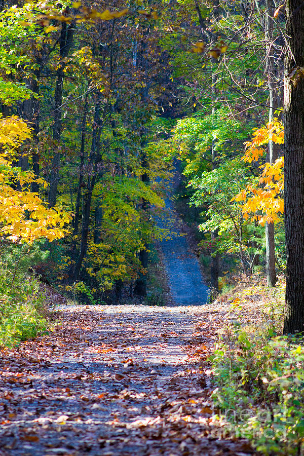 Lane Photograph - Country Lane by Deb Kline