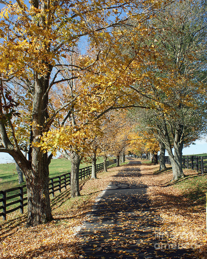 Horse Farm Photograph - Country Lane by Roger Potts