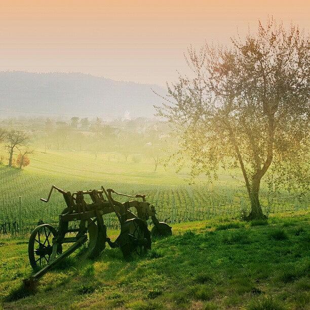 Beautiful Photograph - Country Life by Emanuela Carratoni