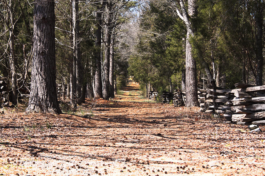 Landscape Photograph - Country Road by Arthur Warlick