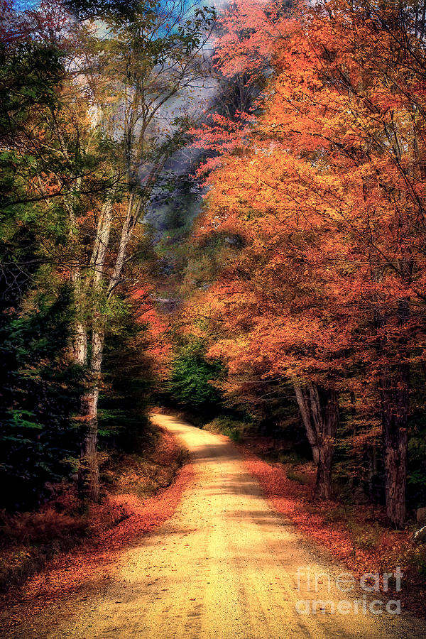 Fall Foliage Photograph - Country Road by Brenda Giasson