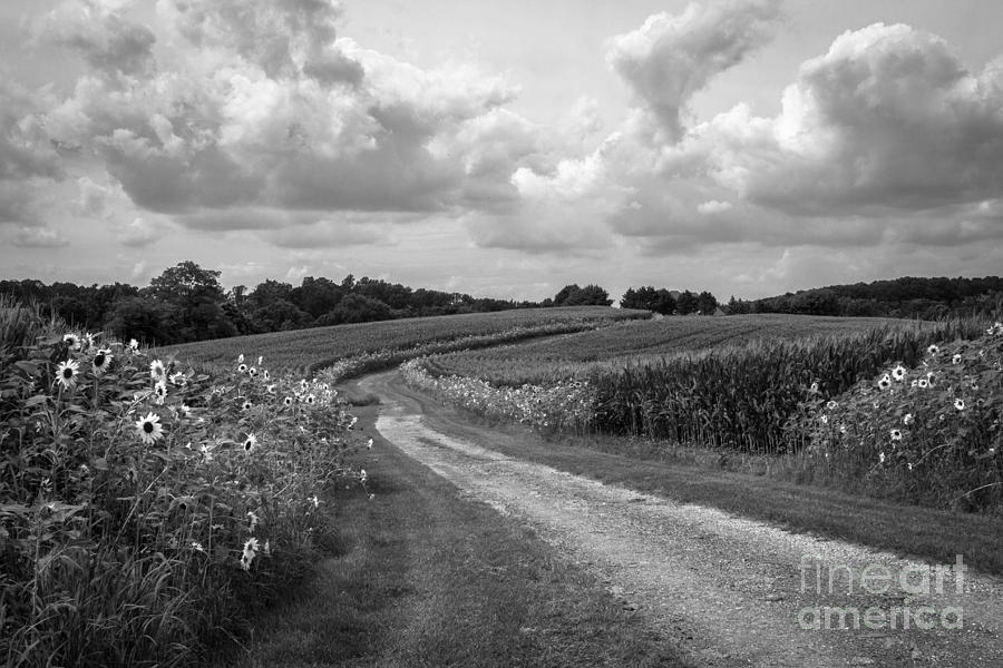 Sunflower Photograph - Country Road by Chris Scroggins