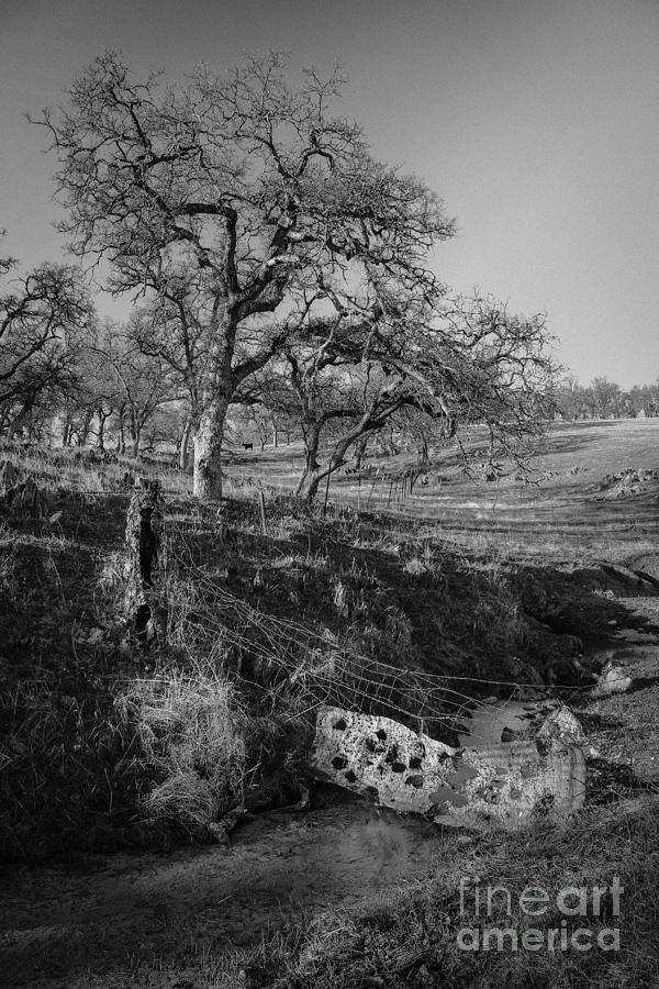 Landscape Photograph - Country Road by Dan Julien
