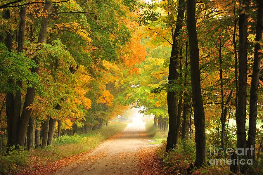 Autumn Photograph - Country Road In Autumn by Terri Gostola