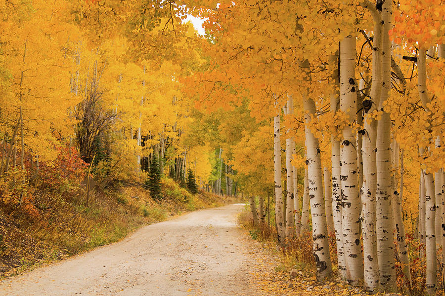 Country Road In Fall Season Photograph by David Epperson