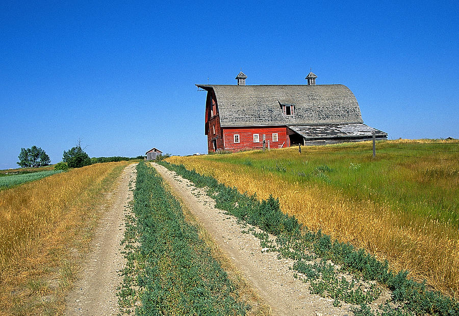 Country Photograph - Country Road In Saskatchewan by Buddy Mays