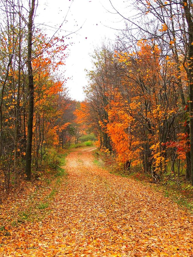 Leaves Photograph - Country Road by Judy  Waller
