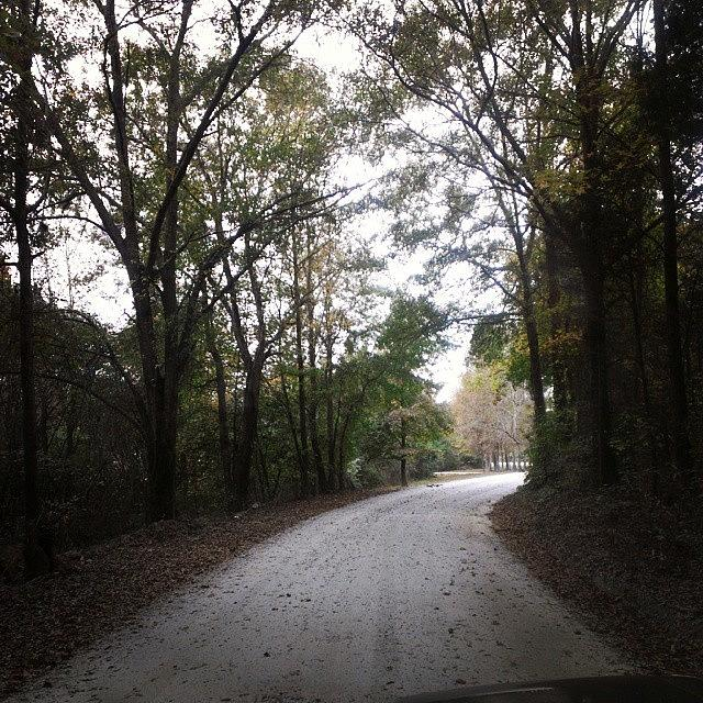 Country Road Photograph by Robin Mead