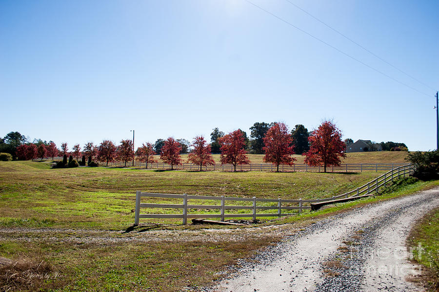 Landscape Photograph - Country Roads by Jinx Farmer