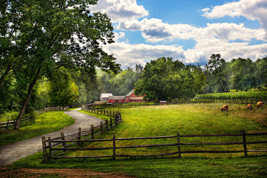 Cow Photograph - Country - The Pasture  by Mike Savad