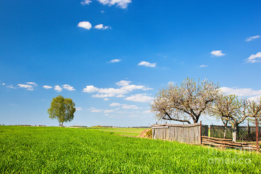 Field Photograph - Countryside Landscape During Spring With Solitary Trees And Fence by Michal Bednarek