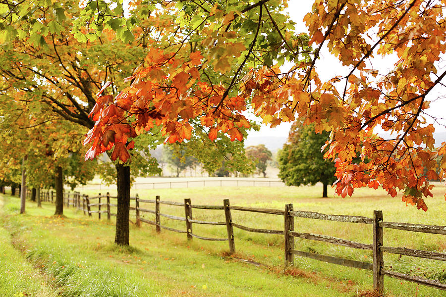 Countryside Landscape With Fence Photograph by Jena Ardell