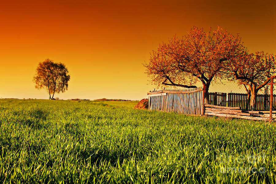 Field Photograph - Countryside Orchard Landscape At Sunset. Spring Time by Michal Bednarek