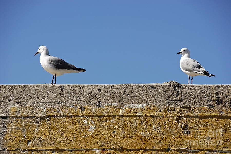Alertness Photograph - Couple Of Seagulls On A Wall by Sami Sarkis