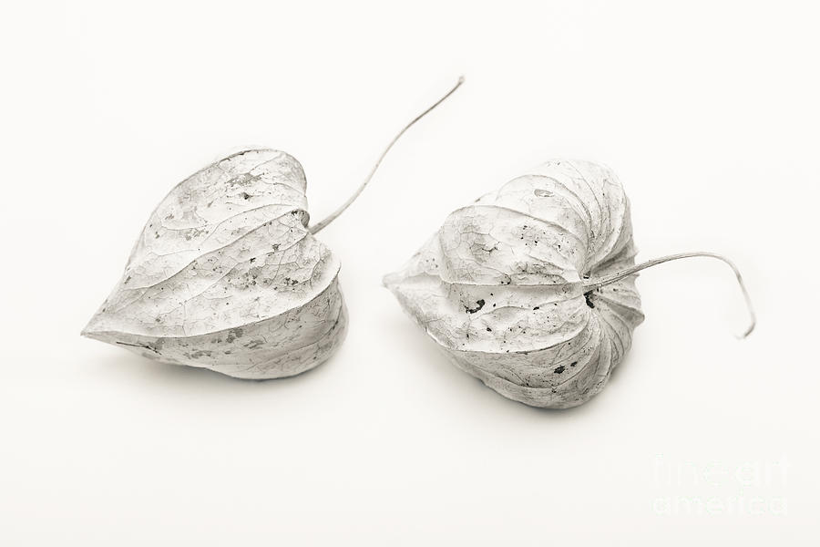 Physalis Photograph - Couple Physalis by Sviatlana Kandybovich