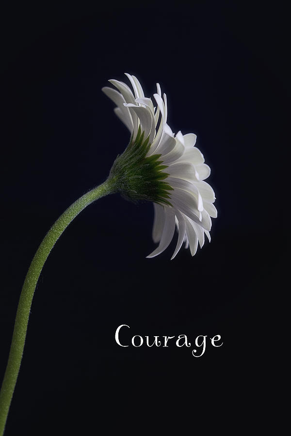 Still Life Photograph - Courage by Kim Andelkovic