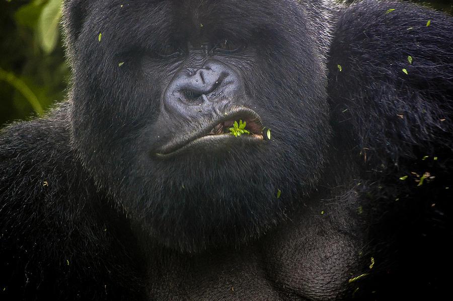 Rwanda Photograph - Cover Shot by Paul Weaver