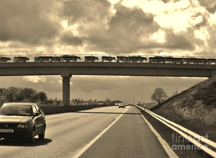 Cows Photograph - Cow Bridge  by Michelle ONeill