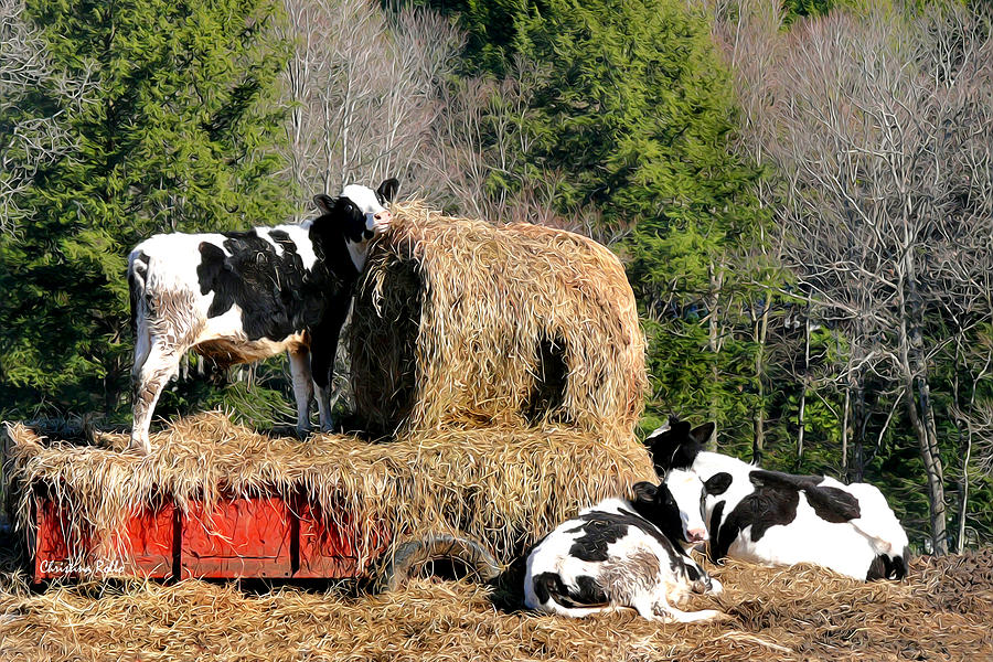 Cow Mixed Media - Cow Country Buffet by Christina Rollo