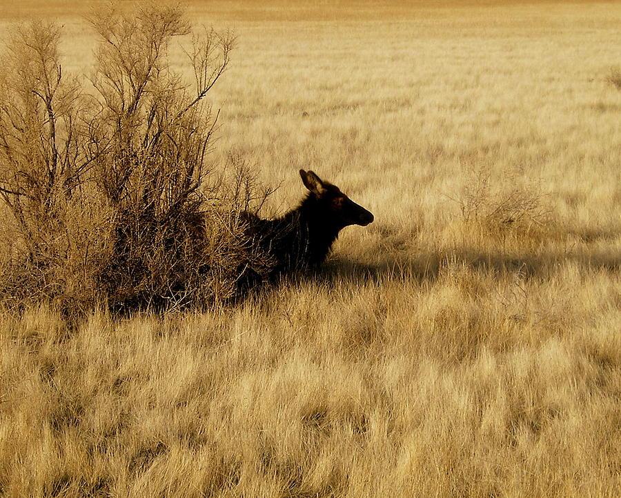 Elk And Landscape Photograph - Cow Elk by Johanna Elik