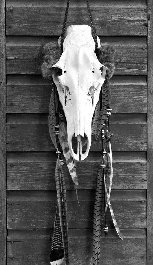 Elk Photograph - Cow Elk Skull And Feathers by Karon Melillo DeVega