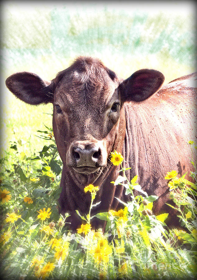 Cow Photograph - Cow In Wildflowers by Ella Kaye Dickey