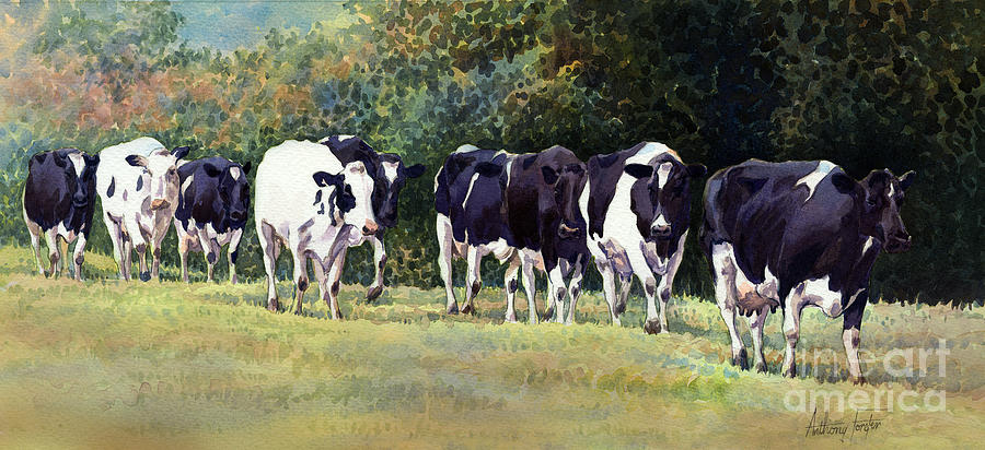 Holstein Cows Painting - Cow Trail by Anthony Forster