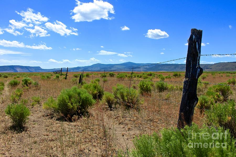 Wild West Photograph - Cowboy Country by Tim Rice