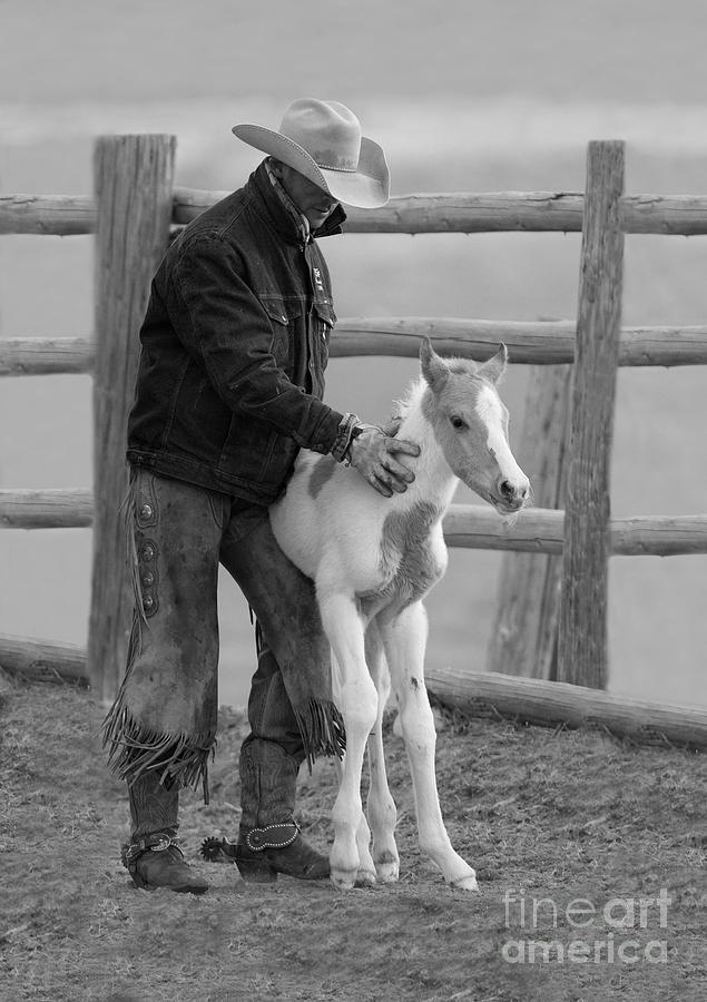 Horse Photograph - Cowboy Steadies Foal by Carol Walker