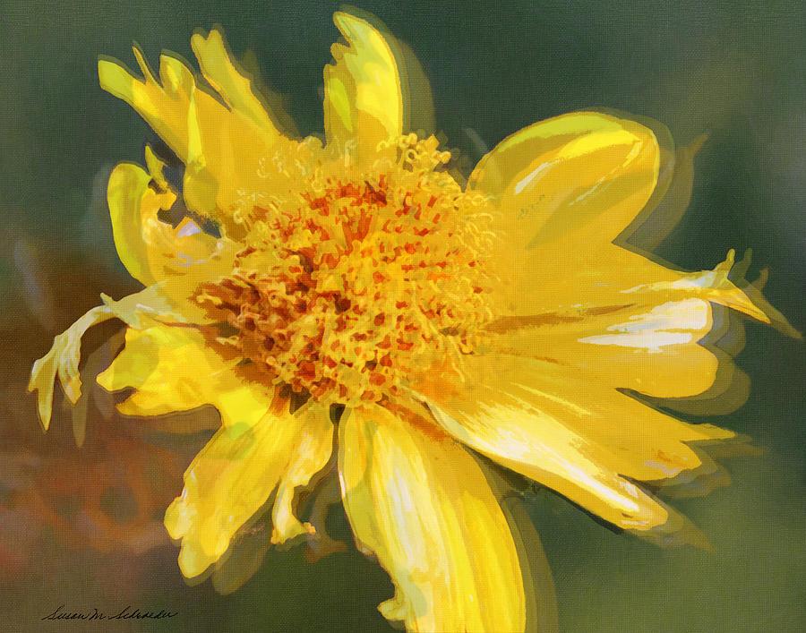 Cowpen Daisy No. 4 by Susan Schroeder
