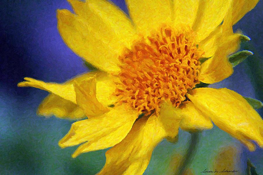 Cowpen Daisy No. 5 by Susan Schroeder