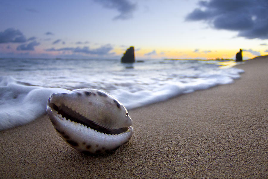 Cowrie Shell Photograph - Cowrie Sunrise by Sean Davey