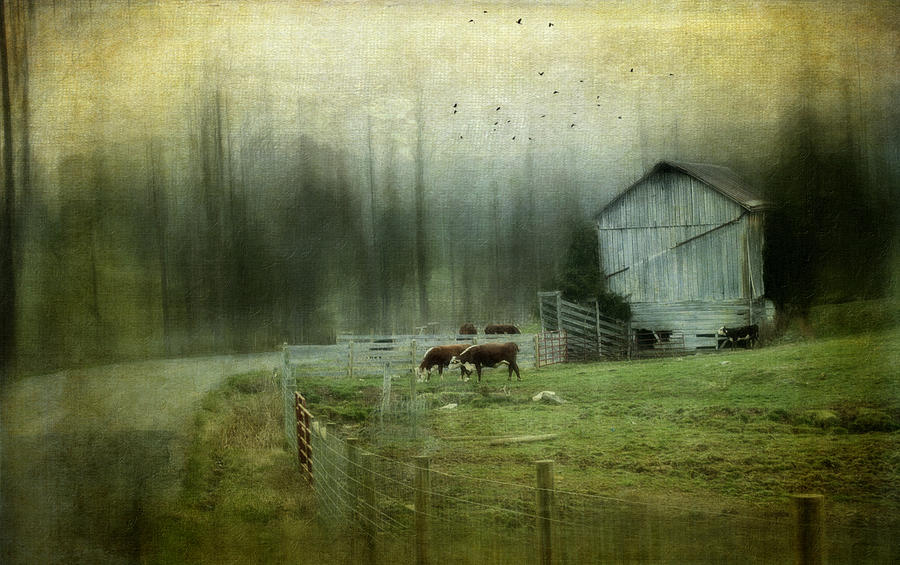 Barn Photograph - Cows By The Road by Kathy Jennings
