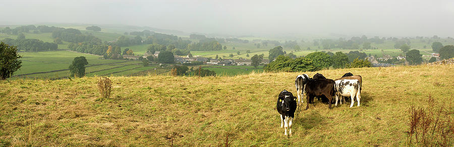Cows Photograph by Steve Fedun