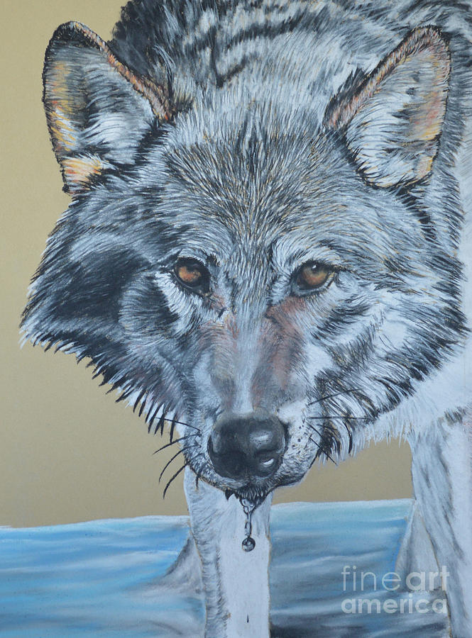 Coyote Pastel - Coyote in Water by Ann Marie Chaffin