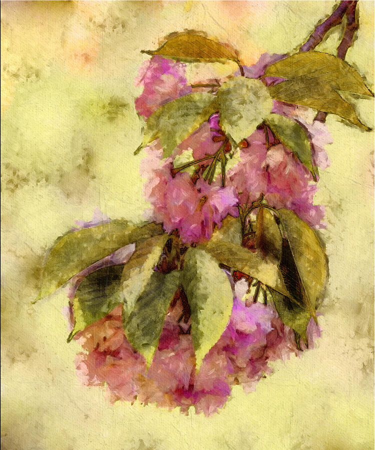 Digital Art Digital Art - Crab Apple by Jill Balsam