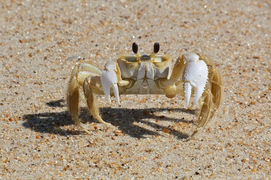 Crab On Sand Photograph by David Wells / Eyeem