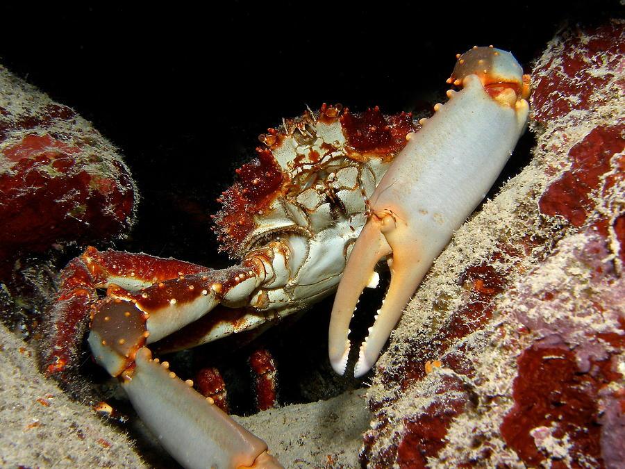 Crab Pose Photograph by Nina Banks
