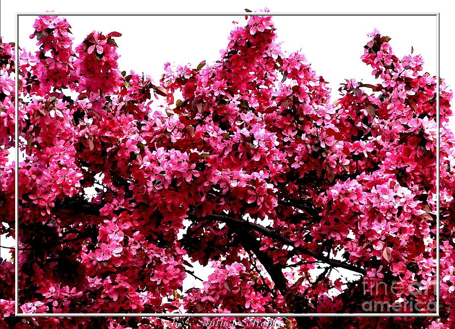 Crabapple Blossoms Photograph - Crabapple Tree Blossoms by Rose Santuci-Sofranko